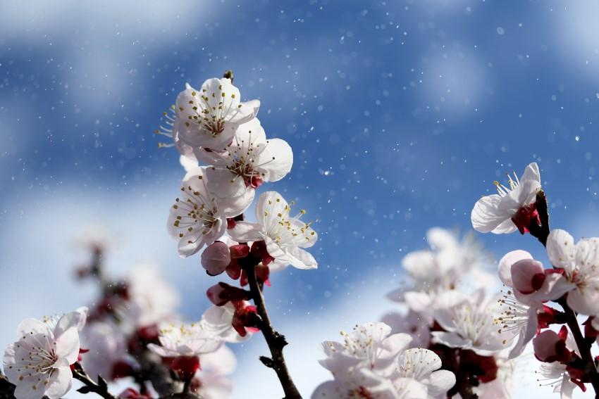 flowers-4071571_1920